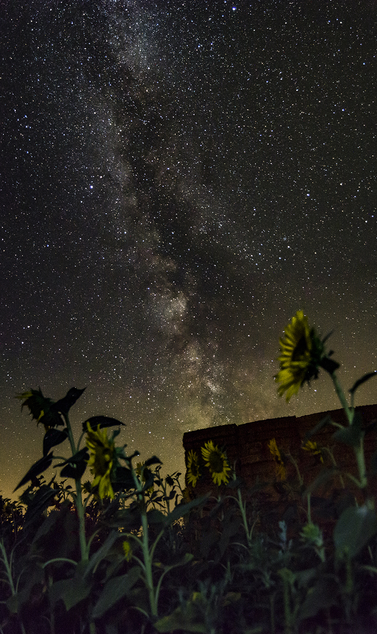 a csillagok kzl vannak pikkelysömör fotók)
