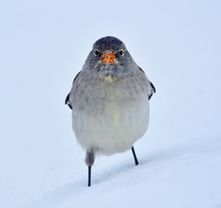 The real angry bird :D :)
